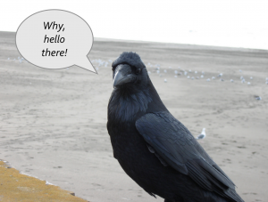 crow talking